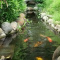 府廟內魚池